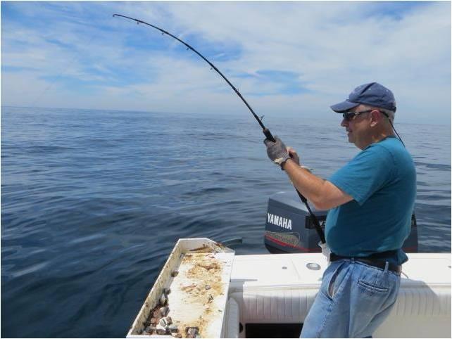 Fishing Shark1